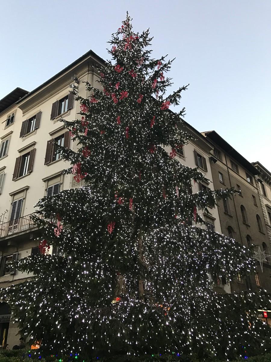 Christmas Tree, Florence, Italy