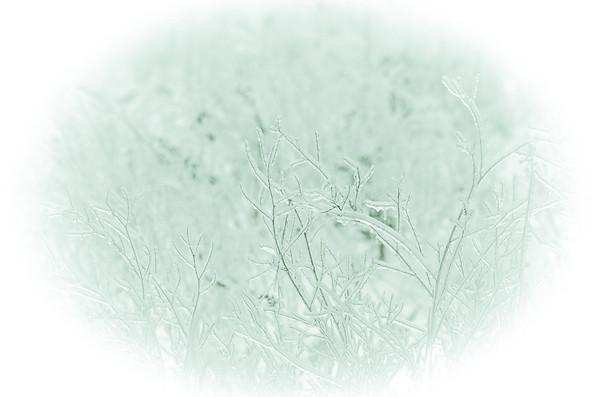 iced grasses black and white
