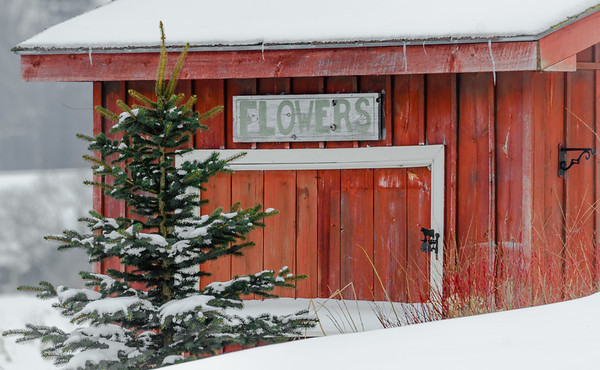 snowy flower shop