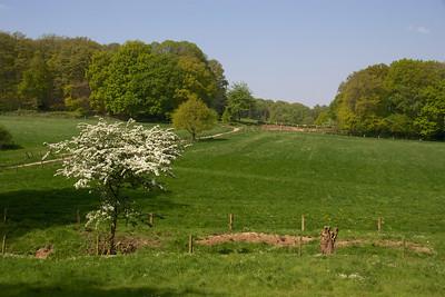 A walk through a forest near Nijmegen
