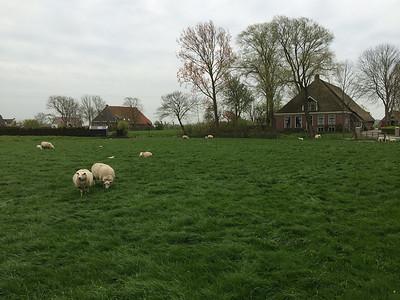 Frisian countryside near Achlum