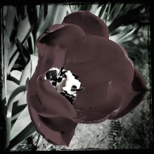 Flora of Keukenhof