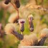 Naardermeer-1090604SchoberPhotography