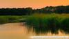 Naardermeer-6557SchoberPhotography