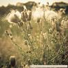 Naardermeer-1090601SchoberPhotography