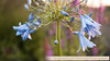 Naardermeer-1090623SchoberPhotography