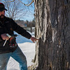 Jim Lattanzi, owner of Hollis Hills Farm, prepares to tap maple trees for sap on Friday, February 17, 2017. SENTINEL & ENTERPRISE / Ashley Green