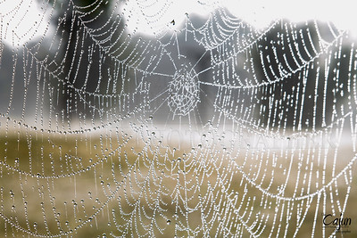 A Foggy Web
