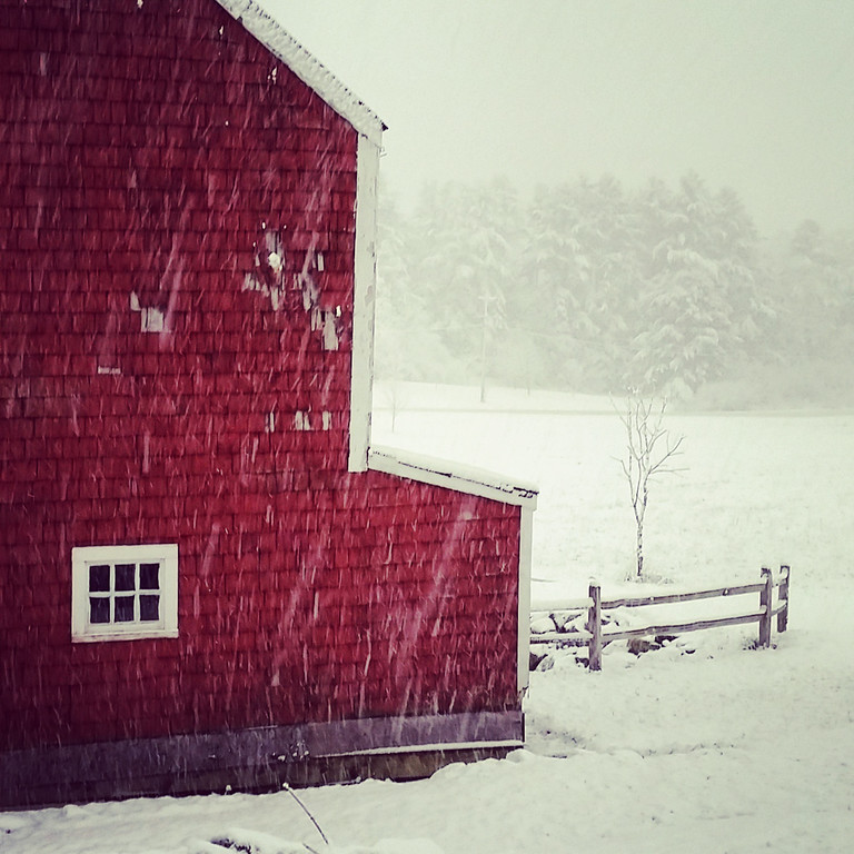 View of the barn from the backdoor during a snowstorm.