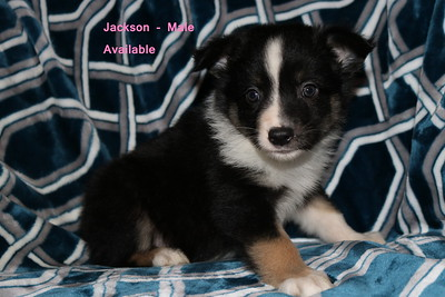 Jackson is pending as of 11/23/18