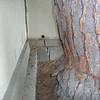 Here you can see how the tree impacted the wall.  There is damage to the foundation, base, and the corner to the left.  The corner is split from top to bottom.