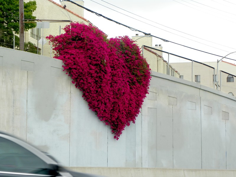 Hollywood Heart by Laurie Freitag #4