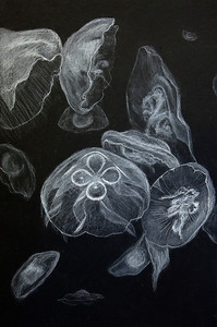 12 - Maggie Davis-Jelly Fish_AS