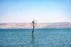 Sailing the Sea of Galilee, buoy