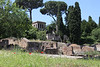 Rome9566<br /> Ruins in the Forum