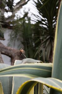 LIMA: kolibrie in de tuin van het museum