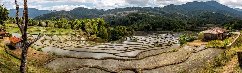 Ook de juist aangeplante rijstvelden zijn echt fotogeniek. De weerspiegeling van de lucht in de bijna lege rijstvelden geef een diepere dimensie aan de foto's.