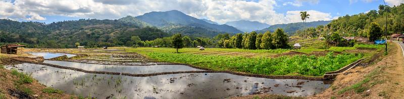 Samengestelde HDR.  panoramische foto van 3 x 5 foto's van de prachtige rijstvelden van Flores. HDR = High Dynamic Range.