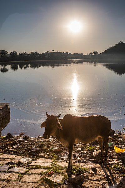 Deogarh - Jaipur - Dag 8