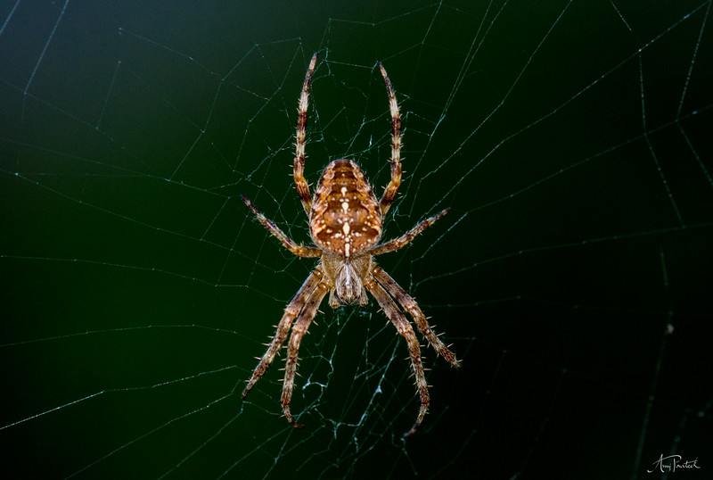 Another spider!
