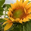 Brittan Road Garden Pictures