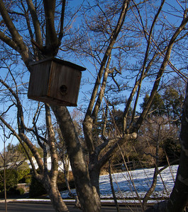 Moving Out of Sparrow Road - John's Birdhouse