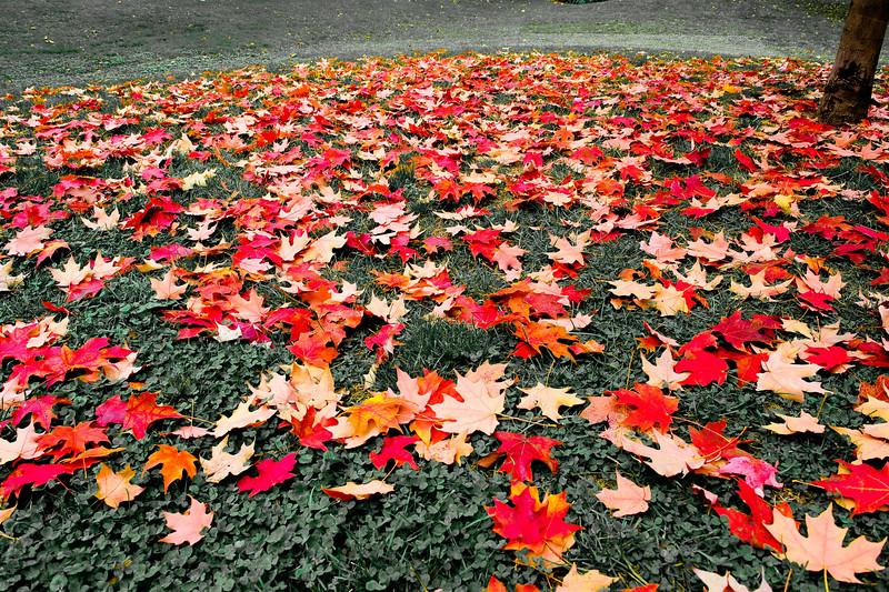 Independence Park - Philadelphia, PA November, 2008
