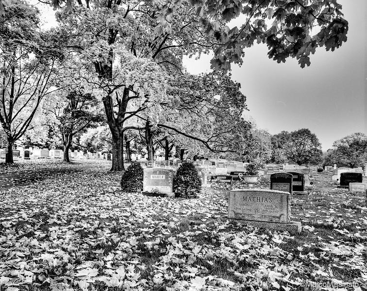 Cimiter Solitude