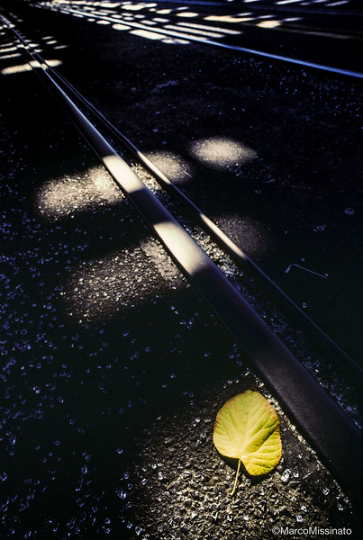 The Leaf And The Rail