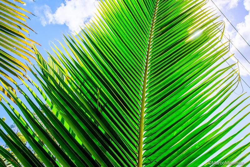 Hawaii-5.jpg