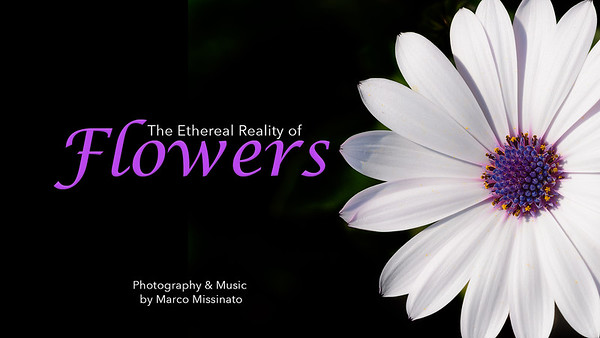 The Ethereal Reality of Flowers - by Marco Missinato  https://youtu.be/Qe81BAzUNR0