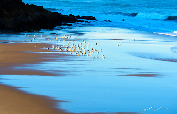 Morning Sun for the Seagulls