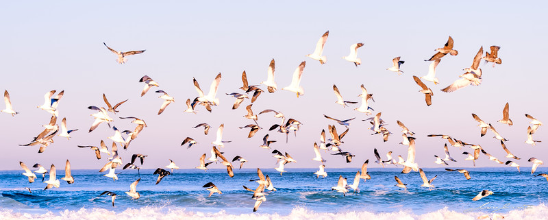 One Thousand Birds,  One Thousand different Flights