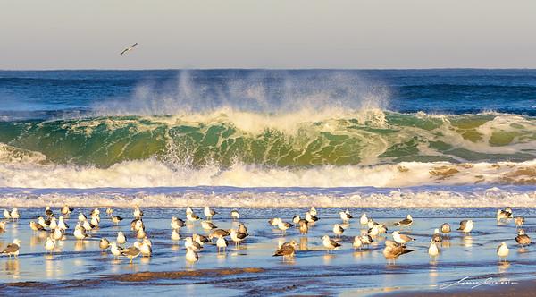 Seagull love Water