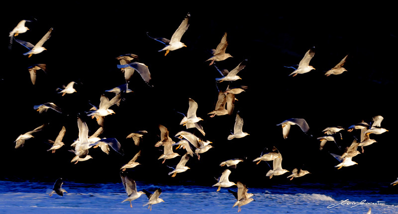 Seagulls Flight