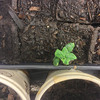 June 2013: Picture from my previous grow box: Persian cucumber begins to sprout.