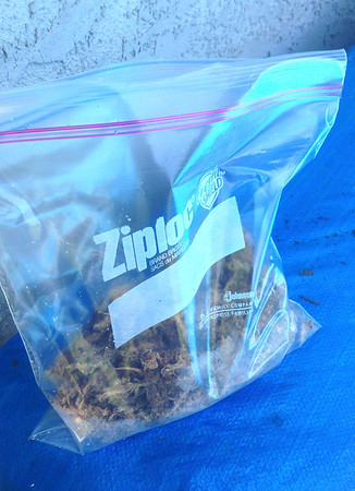 Greenhouse in a Ziploc Bag