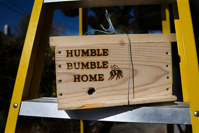 I assembled this bee home and positioned it west to get good afternoon sun.  In March 2009, I put bees near the bee home after the outdoor temperatures reached 60 degrees.