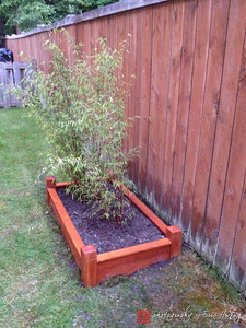 Finished raised bed for bamboo