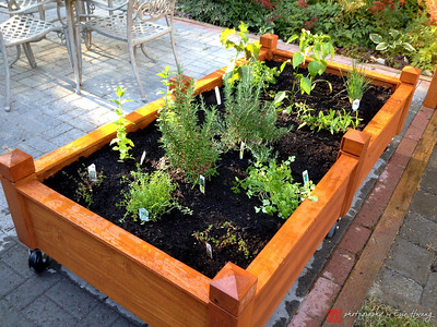 Filled cedar rolling garden planter
