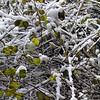 snow_branches