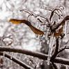 An Oak Twig