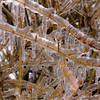 Twigs encased in ice