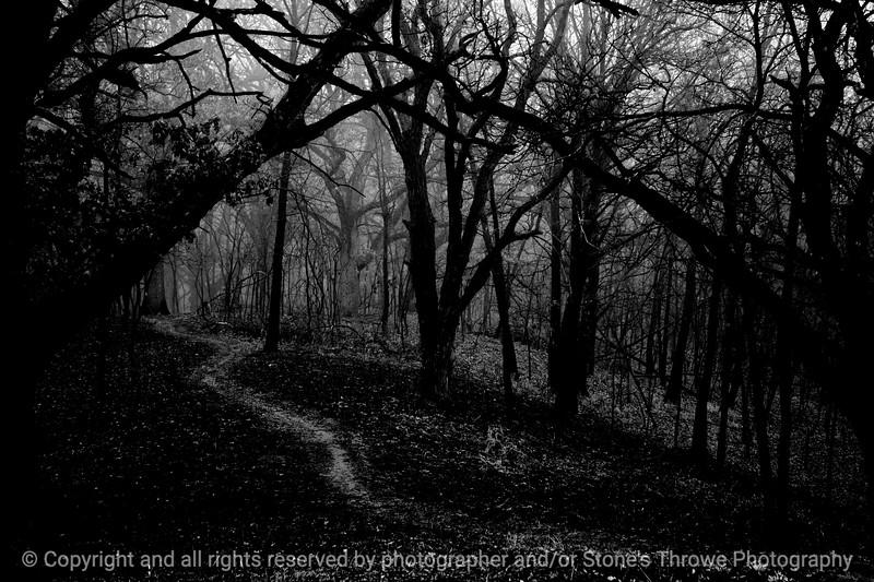 015-tree_path-wdsm-28jan13-bw-003-9354