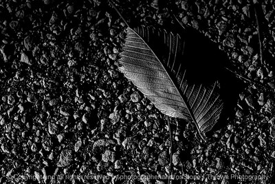 015-leaf_autumn-wdsm-04nov20-12x08-008-400-bw-8879