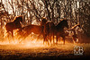 FB_HorsesSunsetRun-1561a