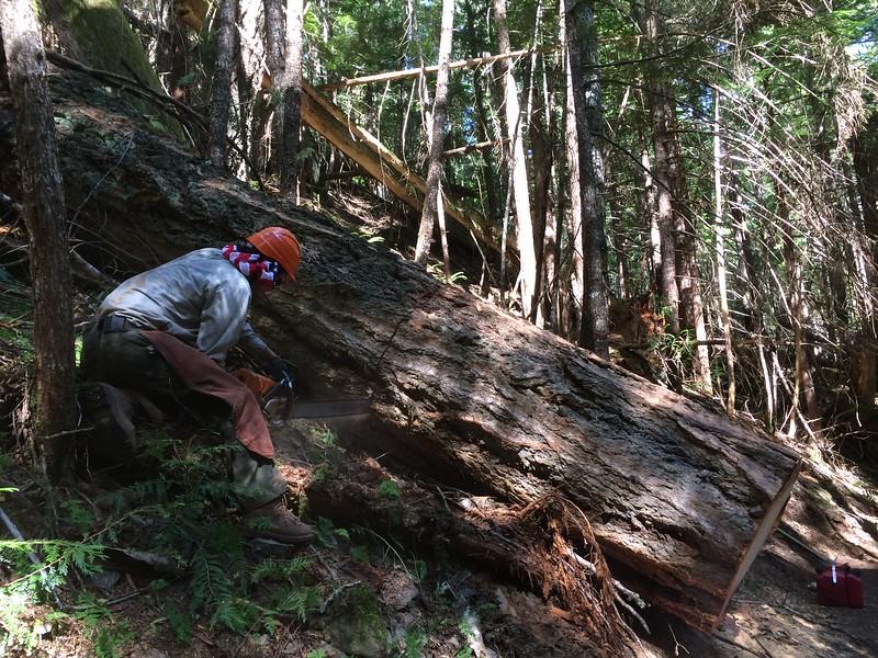 Trail Maintenance 2014- 2017 North Cascades NP