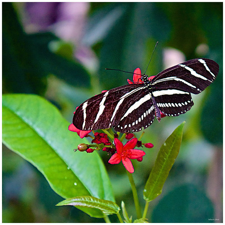 BMZahno_-_Butterfly_Wonderland2
