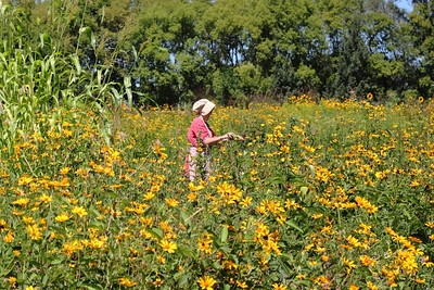 In the field at the Gibbs Farm Museum