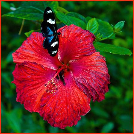 BMZahno_-_Butterfly_Wonderland_1